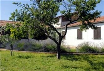 Istrian Family Accommodation- Low Rent- Beautiful Viev on Sea and Olive Trees