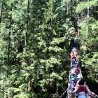 Lynn Valley Suspension Bridge