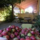 Enjoy an Apple from the Apple Tree on the Shady Terrace Covered by Wysteria