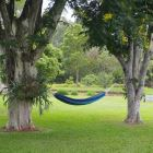 Relax in the Hammock under the Shady Trees.