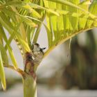 View of a Hummingbird Nest from the Condo Entrace on the Parking Lot