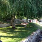 Hammock Area under Willow Tree