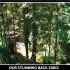 Our Backyard! Private Forest..