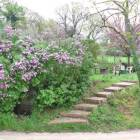 Steps to the Garden in Springtime