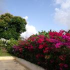 Parking Space with Flowering Bougainvillaea to Welcome you
