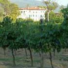The Villa and the Vineyards
