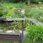 Goldfish Pond, a Quiet Place to Meditate.