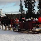 Sleigh Rides Daily through the Lower Forests. There is Also Dog Sled Tours Available.
