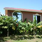 Fruit Trees in Front of Casita  - Papaya, Citrus, and Banana Palm Trees
