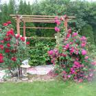 Rose Arbour in Front Yard