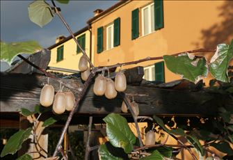 Spend a Relaxing Holiday in the Silence of Ligurian Country Few km From the Sea