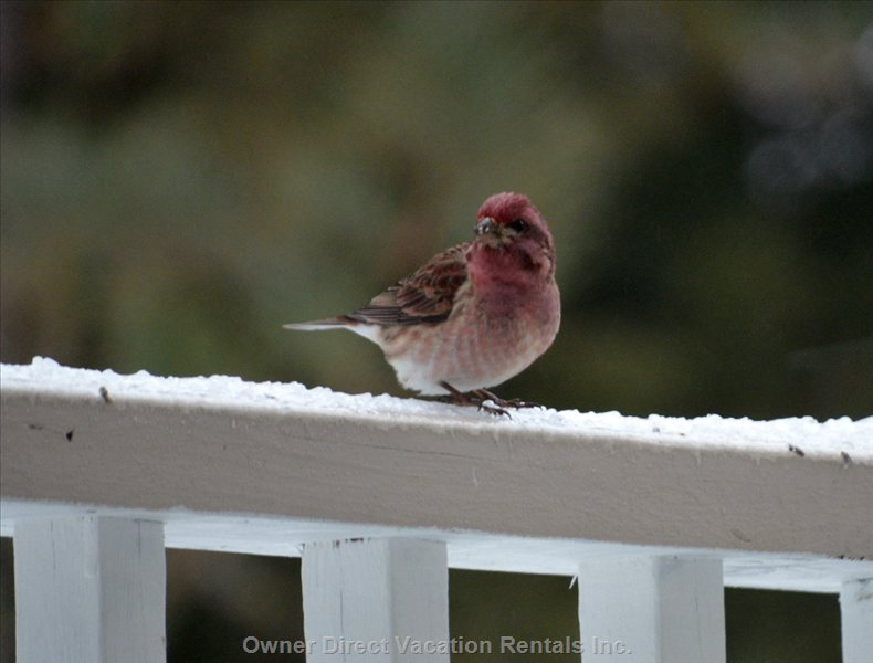 Bird Watching & Photography  4br/3ba, Family Rental Villa, Pet Friendly, Fits 7-9 Guests