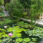 Waterfall/Fish Pond