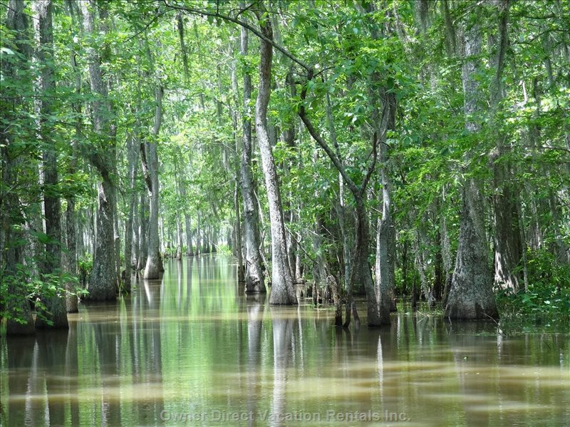 ....A Boat Tour through Mangrove Forests ....