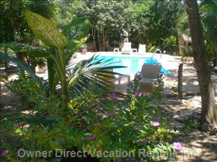Enjoy the Peace in the Mayan Jungle - each Room has its View to the Swimming-pool.