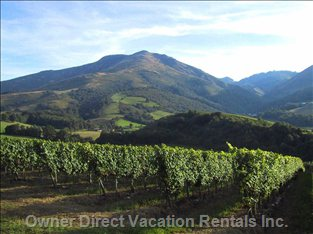 Irouleguy Vineyards - in the Basque Countryside