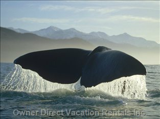 Very Large Whales Here!