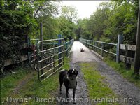 The Dogs Enjoy Crossing the Blue Bridge on the Lusmagh Walk.   The Chestnut Cottage is Pet Friendly- Dogs Welcome!