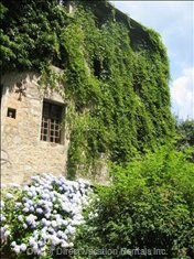 Front View with Rambling Wisteria