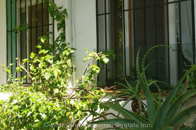 Exterior View - the Front of the Apartment has a Charming Approach Shaded by a Large Fig Tree and a Lemon Tree.