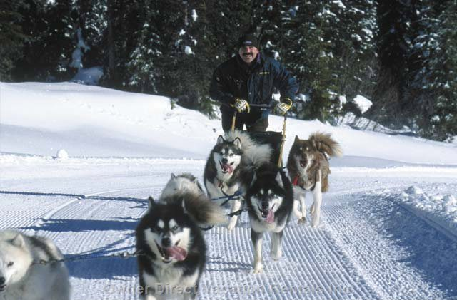 Dog Sledding - Mush you Own Team of Huskies!