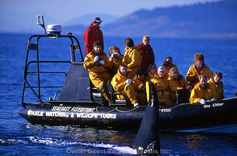 Whale Watching is Just a Short 5 Minute Drive Away