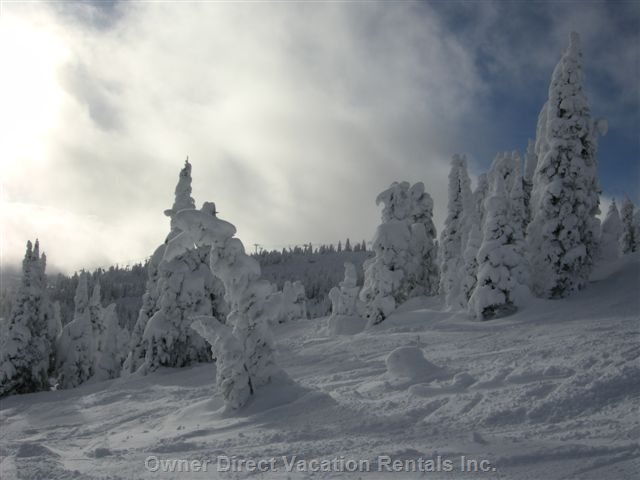 Big White's Famous Snow Ghosts on Old Growth Trees!