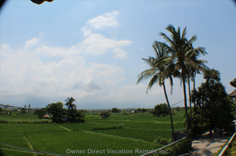 The View to the Rear of the Villa is across Rice Paddy Fields, Farm and Village Life Towards the Mountains.