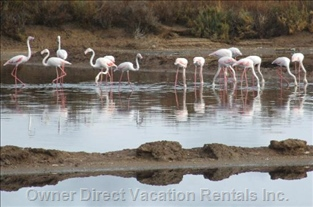 Flamingos in Ria Formosa Natural Park