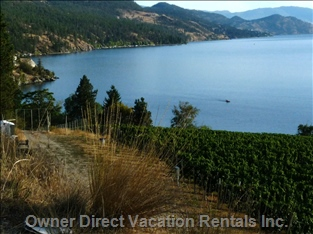 Walk the Waterfront through the Pine Trees to this Viewpoint and Winery (20 Min)