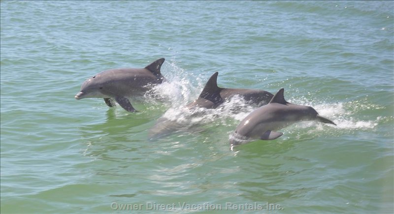 Enjoy the Amazing Dolphins! - Enjoy the Amazing Dolphins and Vacation Fun!