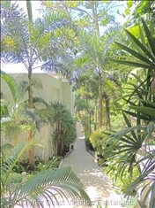 Follow the Garden-Lined Path to the Pool and Beach