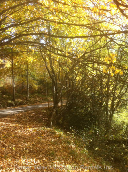 Autumn Colors in the Huge National Park above the House, Orecchiella.