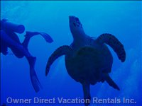 See a Turtle - Diving is a Major Attraction of the Cayman Islands