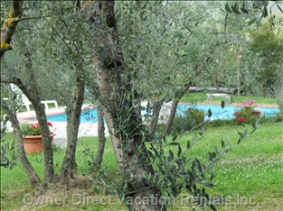 View from Private Terrace of Olives and the Pool - Just a Short Walk of 30 Meters is the Pool.