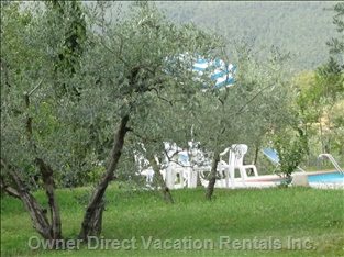 Part of Thegardens - the Cottage is Surrounded by Natural Gardens, Olive Groves and Fabulous Views.
