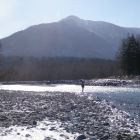 Steelhead Fishing - Winter-run Steelhead Fishing on the Vedder River