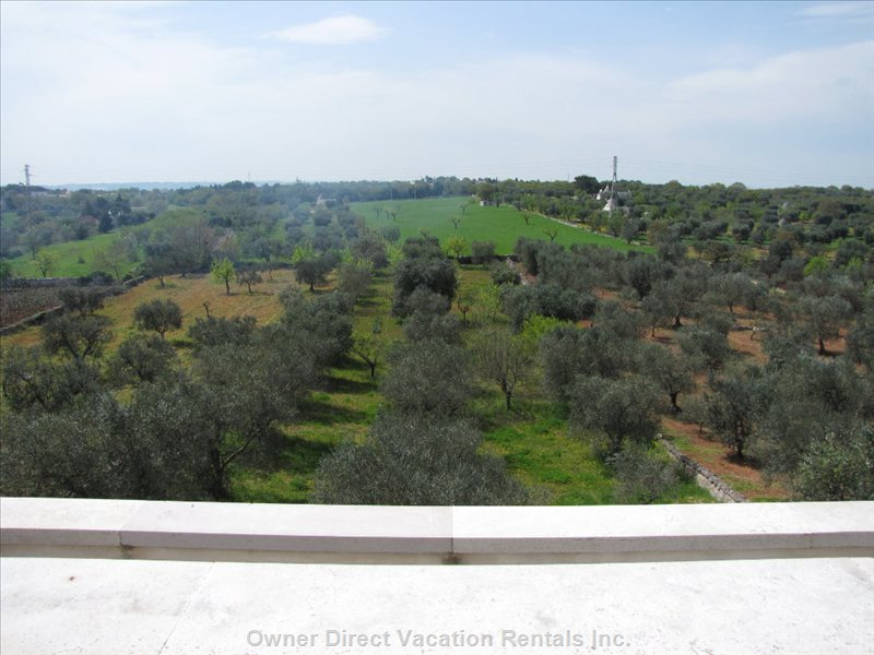 The Olive Garden - 32 Mature Olive Trees and a Variety of Fruit Trees.