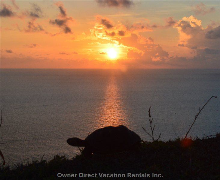 You Will See many Such Sunsets Form the Villa and Do Take Care of the Tortoises