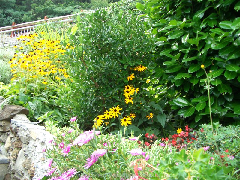 Flowers Blooming in Rock Garden in August
