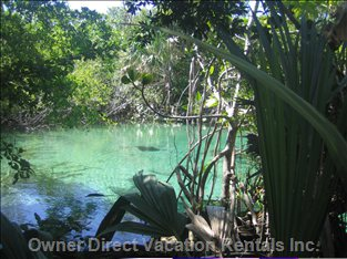 Lagoon-2 Minutes Walking from the Condo - one of the 11 Lagoons in the Ecological Reserve Equipped with Wood Deck for Easy Access