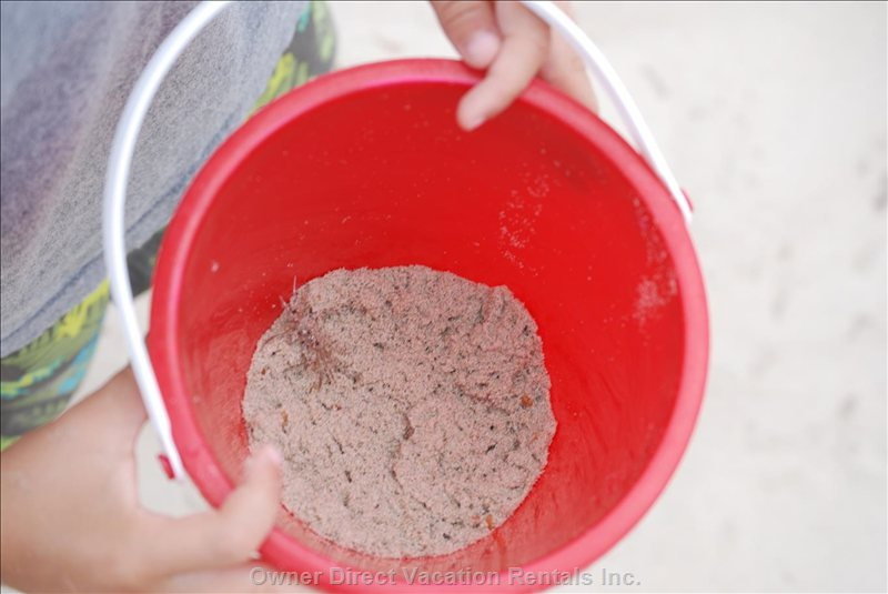 Baby Sand Fiddler Crab in Bucket