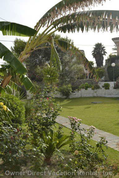 Plenty of Gardens, Tropical Trees and Plants Surround the Complex
