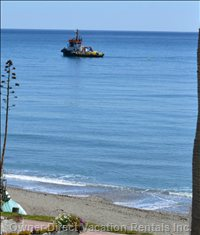 Watch the Local Fishermen Set off from Estepona Port for their Daily Catch!