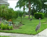 You May See Protected Sandhill Cranes Walking around Rolling Hills. Here they Are in our Side Yard.