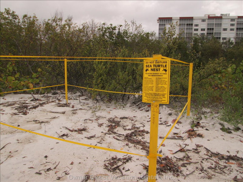 Natural Turtle Nesting Areas along the Beach