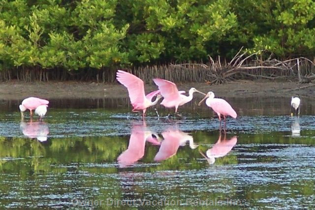 Native Birds of Florida