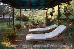 Chaise Loungers near the Pool