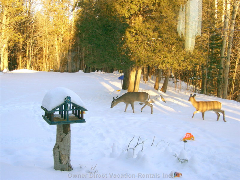There Are Always a Lot of Deer and other Wild Life around