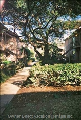 Courtyard with Live Oaks